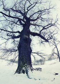 Baum von Falko Follert