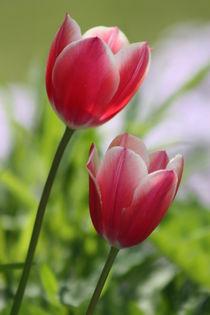 Frühlingssehnsucht von Bettina Schnittert