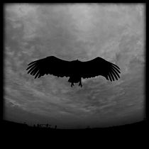 Griffon vulture by Stefan Antoni - StefAntoni.nl