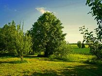 Grüne Sommerlandschaft by aidao