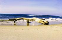 Treibholz am Meer von aidao