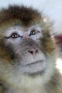 portrait of a monkey von Martyn Bennett
