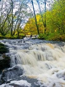 Garnwent-forestry-8