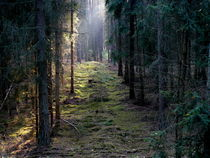 Lichter Weg durch das Dunkel by Heidrun Carola Herrmann
