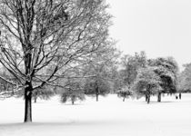 Snowland by Vinicios de Moura