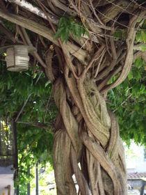 Ich bin ein Baum von Corinna Schumann