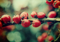 Red Winter Berries von Sybille Sterk