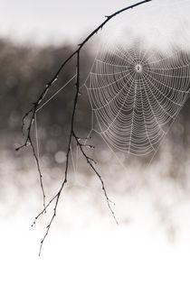 Spider web von Mikael Svensson