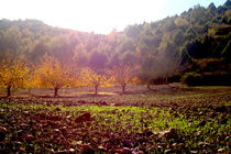 Fall colors by Ana Mazi