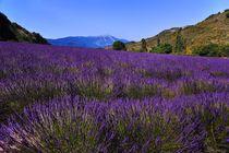 Lavendelfeld mit Mont Ventoux by Jürgen Feuerer