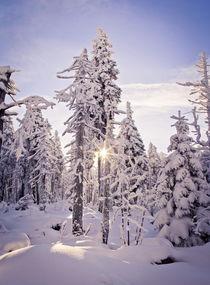 Winter von Henrik Herr