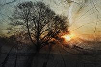der Baum  von Barbara  Keichel