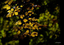 autumn colours von christophrm