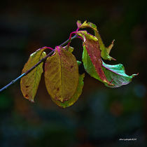 changing colour von christophrm