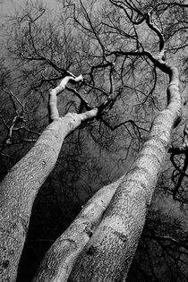 Scenic trees von David Pyatt