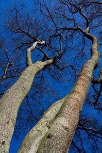 Reach For The sky by David Pyatt
