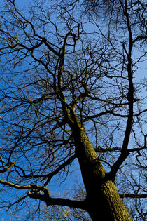Wild wood Tree by David Pyatt