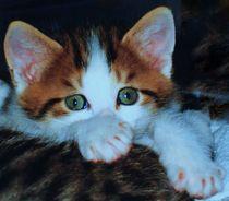 Katzenbaby by aidao