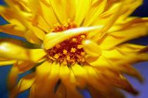 Yellow Flower von aidao