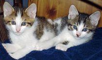Katzenbrüder by aidao