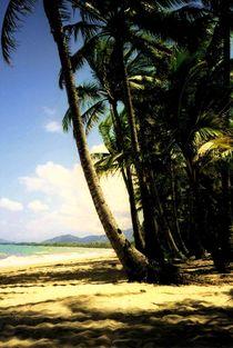 Palmenstrand Australien von aidao