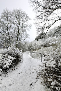 Beyond-a-pale-winter-night