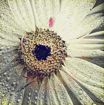 Pure Florals. by rosanna zavanaiu