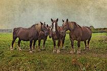 Pferde Schwarzwälder Füchse by pahit
