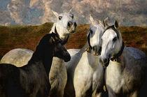 Pferde Stutenherde PRE von pahit