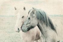Pferde Islandpferde by pahit