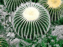 Big Cactus  by tiaeitsch