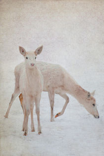Hirsche im Schnee von pahit