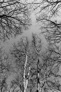 English Forest Trees by David Pyatt