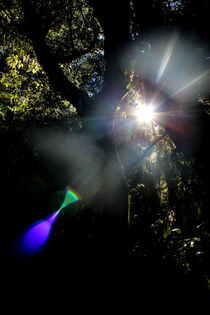 Rainbow Forrest by Gitta Wick
