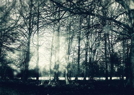 Faeriewood-c-sybillesterk