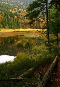 Im Naturpark by Brigitte Deus-Neumann