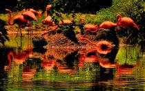 Red light of flamingos by Maks Erlikh