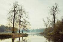 foggy morning in Pushkin von Olya Shevnina