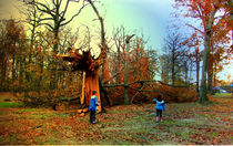 NY park after hurricane Sandy von Maks Erlikh