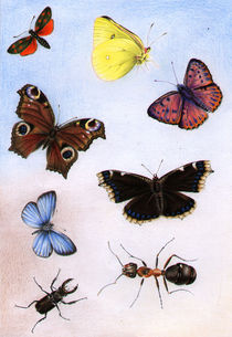 Butterflies, Schmetterlinge