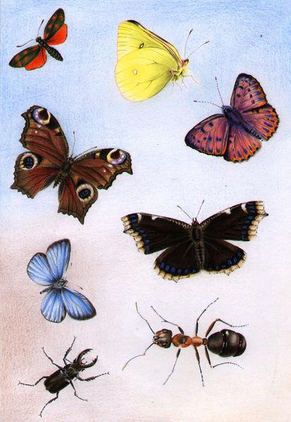 Schmetterlinge-denitza-gruber