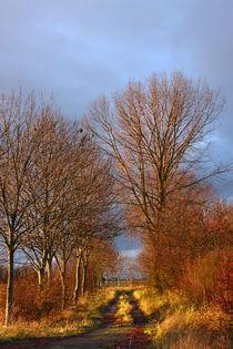 Herbstweg-3