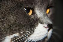 Katze von Thomas Train