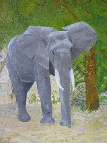 Elefantenbulle von Helmut Hackl