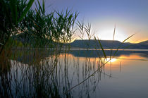 Reed sunset von linconnu
