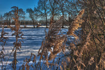 Winterlandschaft by michas-pix
