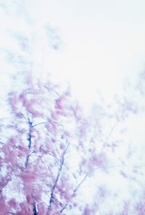Oriental cherry moving in the wind von Intensivelight Panorama-Edition