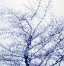 Winter tree by Intensivelight Panorama-Edition