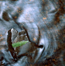 Fern leaf on a rock by Intensivelight Panorama-Edition