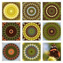 3x3 Butterfly II von Ralph Patzel